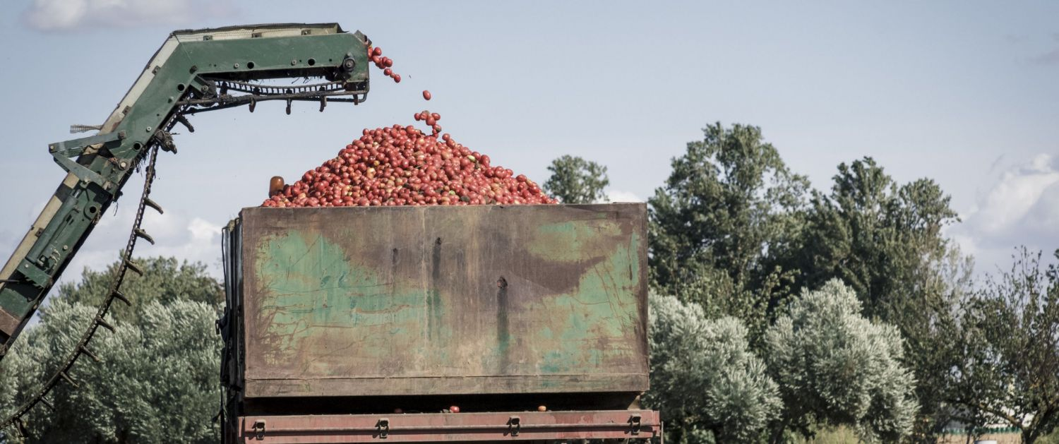 mechanical tomato harvesters had unintended consequences in a complex system