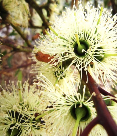 A wildflower, representing an example of Australia's biodiversity